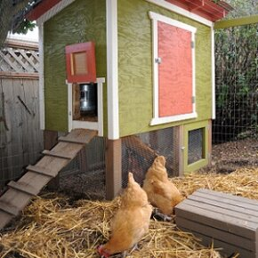 No matter what the size or style of your home, there is a chicken coop that will compliment it nicely.