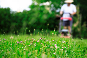 When those weeds get waist-high, there's no denying it: You need to get a lawn mower.