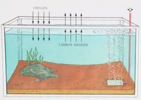 At the surface level of an aquarium, water and air undergo a natural exchange of gases.