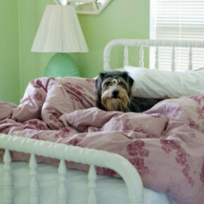 A down comforter can become very uncomfortable if it's cared for improperly.