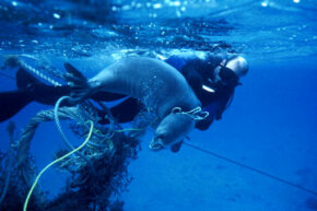 Lots of human refuse ends up in the ocean. See more pictures of ocean conservation.