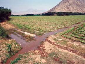 The ancient Peruvians probably used simple irrigation systems like those seen today in Supe Valley.