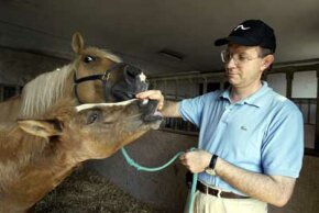 Prometea, left, the world's first horse clone, nuzzles the hand of Italian scientist Cesare Galli as her mother Stella Cometa looks on.