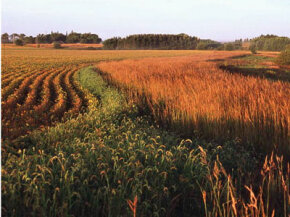 Conservation agriculture is becoming a popular alternative to traditional farming methods. See more vegetable pictures.