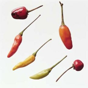 Spice Image Gallery Explore the variety and flavor of chilies in your next recipe. Check out these spice pictures.