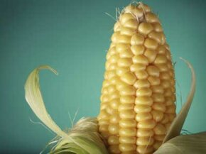 Is corn the answer, or should we rethink our use of plastics?