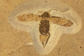 Just like lice, cockroaches are survivors. Researchers unearthed this Cretaceous cockroach fossil in Brazil.