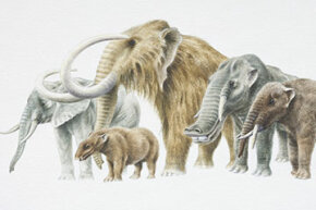 Could someone use CRISPR technology to resurrect the woolly mammoth by injecting a segment of its DNA into an elephant's DNA? It hasn't happened yet but that's just one concern some scientists have.
