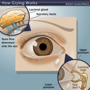 Illustration of what happens in and around the human eye when humans cry