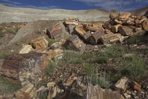 Gen. William Sherman recognized the value of these petrified trees.
