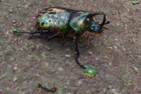 You can see that Deep Dream took an image of a beetle and used its data about similar creatures to reconstruct the original photo subject and background.