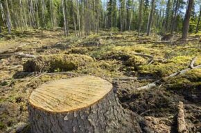 The destruction of forests can have long lasting negative effects on our world. See more pictures of trees.