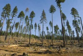 Deforestation removes the forest canopy, which can result in soil erosion.