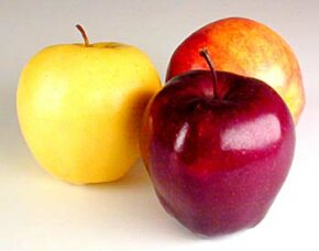 Not all apples are created equal but all are healthy and delicious. See more pictures of apples.