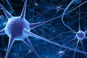 There are an estimated 100 billion neurons in the human brain.