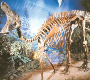 Lamebeosaurus on display at the Royal Ontario Museum