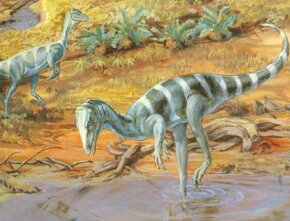 Coelophysis, found in Ghost Ranch, New Mexico