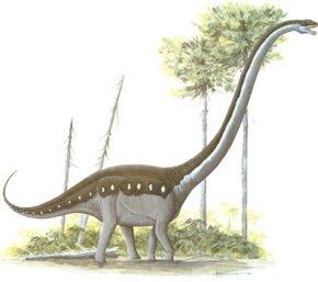 Omeisaurus tianfuensis