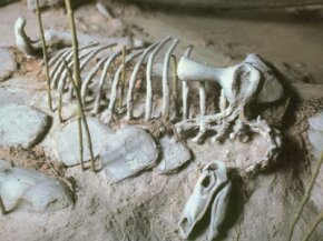 A Stegosaurus skeleton on a sandbar