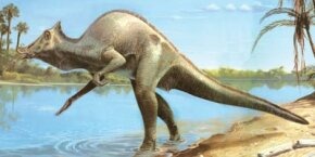 These duckbilled dinosaurs, named Saurolophus, enjoy the shade and water on a warm Late Cretaceous day.