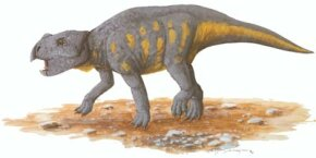 Bagaceratops rozhdestvenskyi. See more dinosaur images.