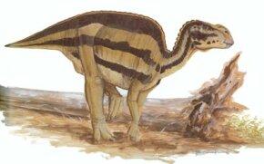 Brachylophosaurus canadensis. See more dinosaur images.