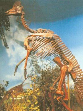 Corythosaurus skeleton at the Toyal Ontario Museum. See more dinosaur images.