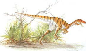 Dromaeosaurus albertensis See more dinosaur images.
