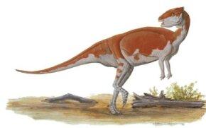 Homocephale calathocercos See more dinosaur images.