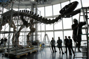 Fossils typically give us only the skeletal framework for a dinosaur, not the meat itself. See more dinosaur pictures.