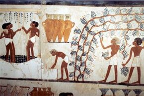 This wall painting from the tomb of the scribe Menna in ancient Egypt, circa 1419-1380 B.C.E., shows workers picking grapes in a vineyard and treading them, presumably to make wine.