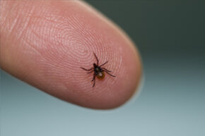 A zoonotic disease is a pathogen that passes from an animal to a human, such as lyme disease from ticks.