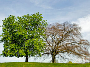 It's pretty easy to tell if you're tree is healthy or sick, but it may be trickier to determine if it's just sick or if it's dead. See more pictures of trees.