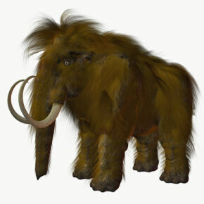 Scientists believe that up to 10 million mammoths may be buried under the permafrost of the vast Siberian tundra. Some scientists to advocate cloning the animals.