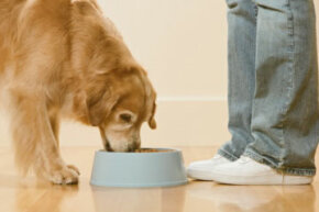 Check your dog's weight frequently to make sure he's getting the right amount of food.