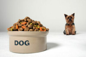 How does protein fit in with your dog's development? See more dog pictures.
