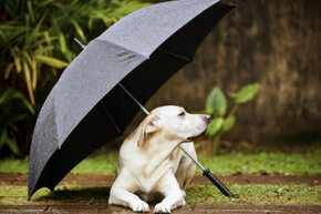 We know dogs (and other animals) have a better sense of hearing and smell, but are they also better at sensing the weather?