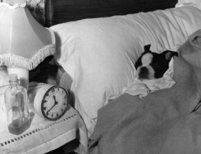 Does a dog understand the passing of time in the same way a human does? See more pictures of dogs.