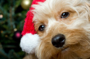 Even if your pooch knocks his hat off in 10 minutes, it's still fun to be festive!