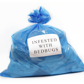 If you suspect your clothes or other items have been infested with bedbugs, quarantine them in plastic bags before laundering or treating them. Want to learn more? Check out these pictures of insects.
