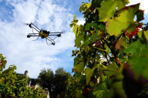 A drone inspects grape vines in a French vineyard.