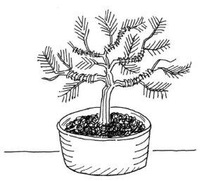 Nurture a bonsai tree.