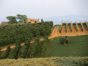 Sweet Lambrusco wine comes from vineyards in the Emilia-Romagna region of Italy. See our collection of wine pictures.