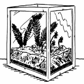 Build your very own mini ecosystem