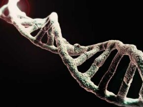 DNA may provide a genetic plan for you, but various factors affect how that plan will be expressed.