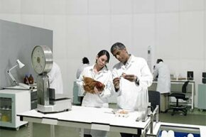 Scientists experiment on a chicken in a lab.