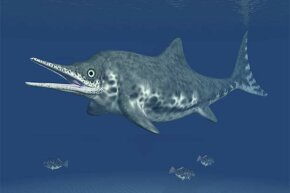 The Dearcmhara looked similar to this Ichthyosaur Stenopterygius.