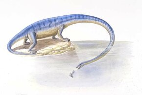 The Tanystropheus had a 20-foot neck, which allowed it to pluck fish out the water without getting wet.