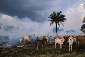 Smoldering pastureland cleared for cattle from the Amazon rainforest, Rondonia State, Brazil