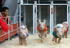 Farmers' markets offer a lot more than fresh food. The Farmers' Market Fall Festival in Los Angeles sports a pig race.